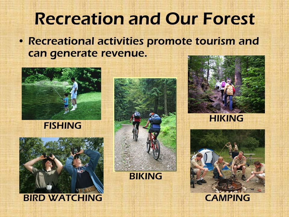 Recreation and Our Forest Recreational activities promote tourism and can generate revenue.