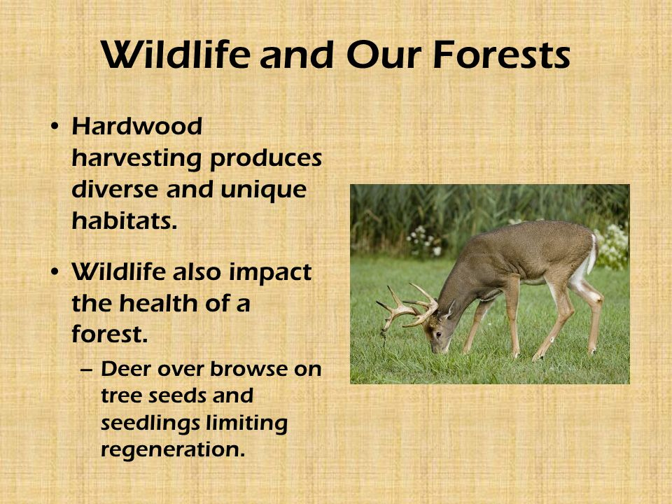 Wildlife and Our Forests Hardwood harvesting produces diverse and unique habitats.