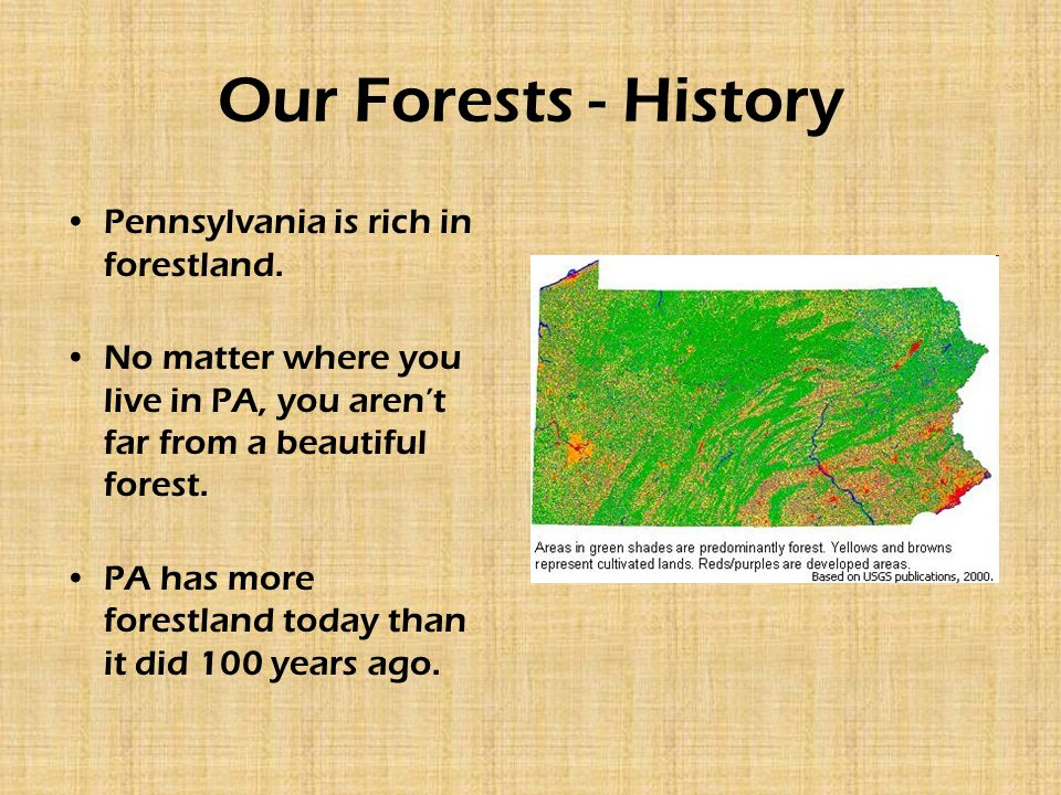 Our Forests - History Pennsylvania is rich in forestland. No matter where you live in PA, you aren't far from a beautiful forest. PA has more forestla