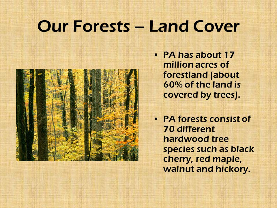 Our Forests – Land Cover PA has about 17 million acres of forestland (about 60% of the land is covered by trees). PA forests consist of 70 different h