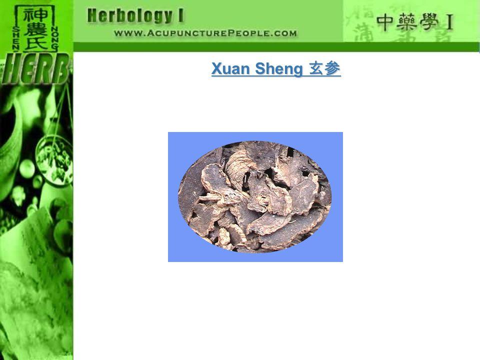Xuan Sheng 玄参