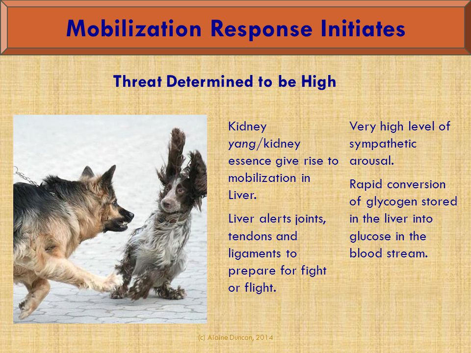 (c) Alaine Duncan, 2014 Kidney yang/kidney essence give rise to mobilization in Liver. Liver alerts joints, tendons and ligaments to prepare for fight