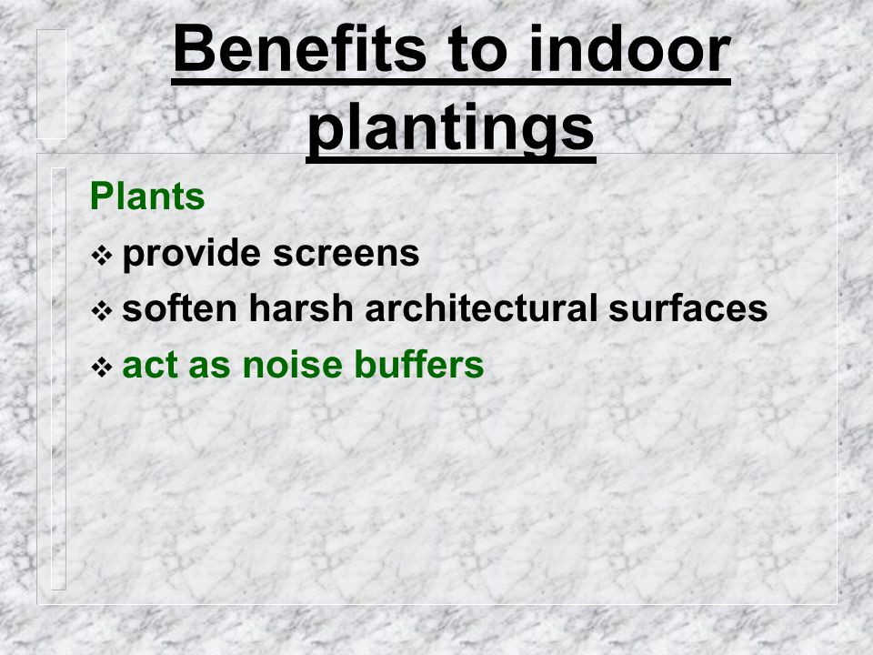 Benefits to indoor plantings Plants  provide screens  soften harsh architectural surfaces  act as noise buffers