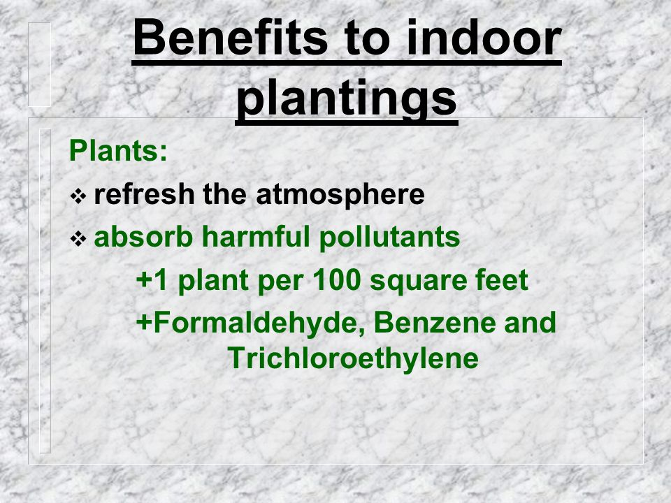 Benefits to indoor plantings Plants:  refresh the atmosphere  absorb harmful pollutants +1 plant per 100 square feet +Formaldehyde, Benzene and Trichloroethylene