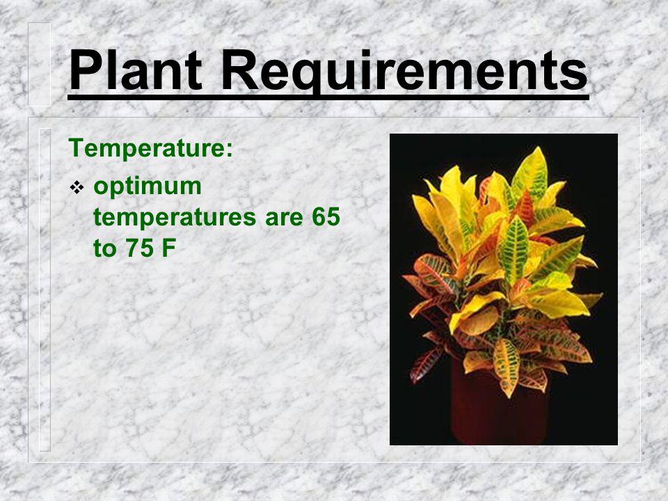 Plant Requirements Temperature:  optimum temperatures are 65 to 75 F