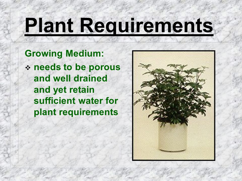 Plant Requirements Growing Medium:  needs to be porous and well drained and yet retain sufficient water for plant requirements