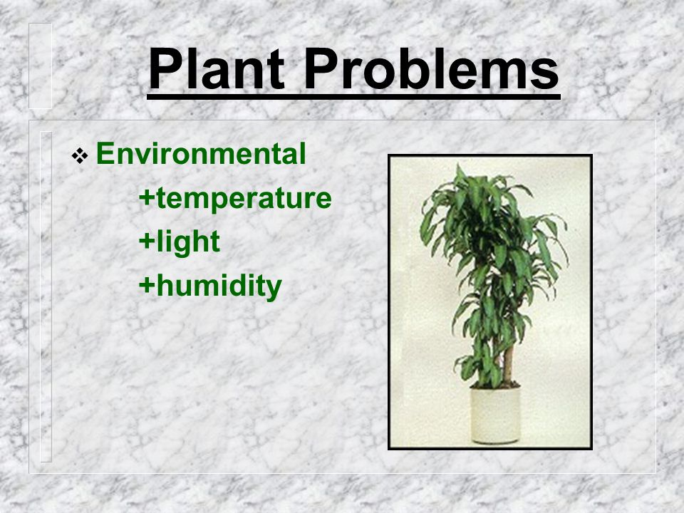 Plant Problems  Environmental +temperature +light +humidity