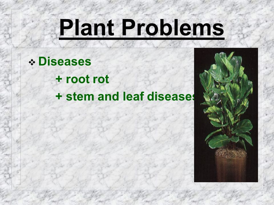 Plant Problems  Diseases + root rot + stem and leaf diseases