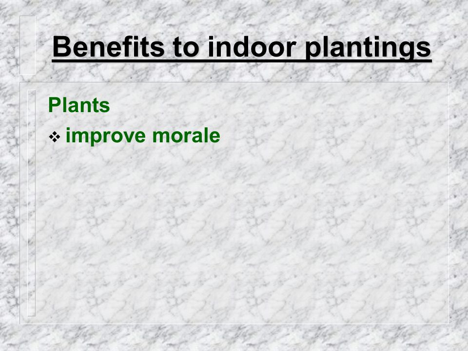 Types of Interior Landscape Firms  Install and Maintain