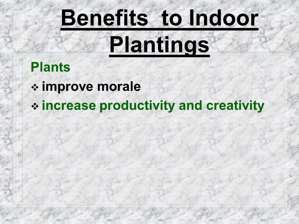 Benefits to indoor plantings Plants  improve morale  increase productivity and creativity  enhance the environment aesthetically as an inexpensive decorating alternative by adding warmth and color