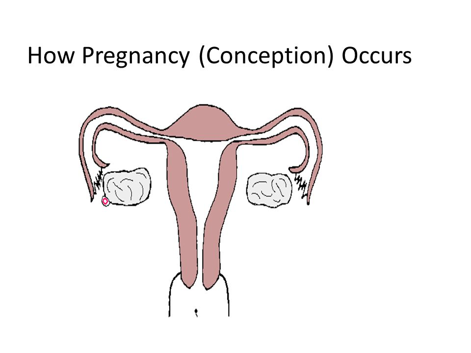 Contraception mechanism Prevents ovulation Thickens mucus at the cervix so sperm cannot pass through Changes the environment of the uterus and fallopian tubes to prevent fertilization and to prevent implantation if fertilization occurs Block sperm from reaching the egg