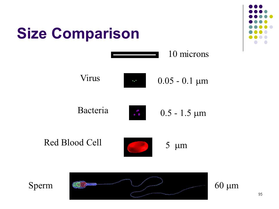 Size Comparison 10 microns 0.05 - 0.1  m 0.5 - 1.5  m 5  m 60  m Virus Bacteria Red Blood Cell Sperm 95