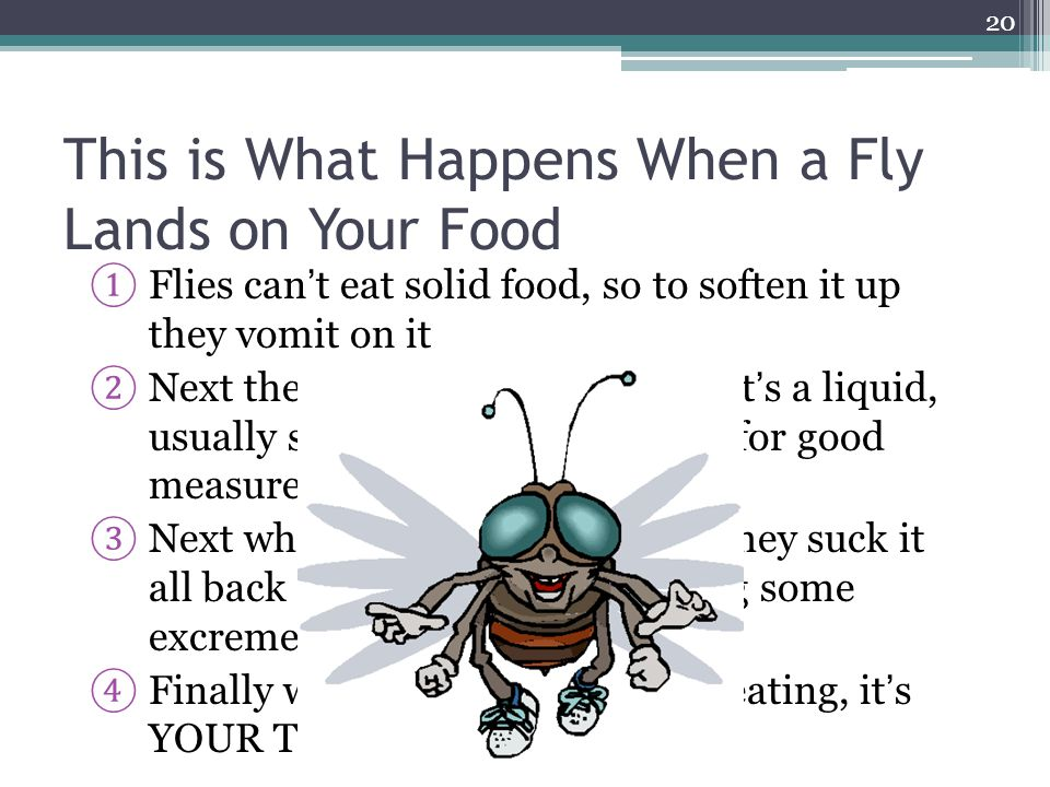 This is What Happens When a Fly Lands on Your Food ① Flies can't eat solid food, so to soften it up they vomit on it ② Next they stamp the vomit until