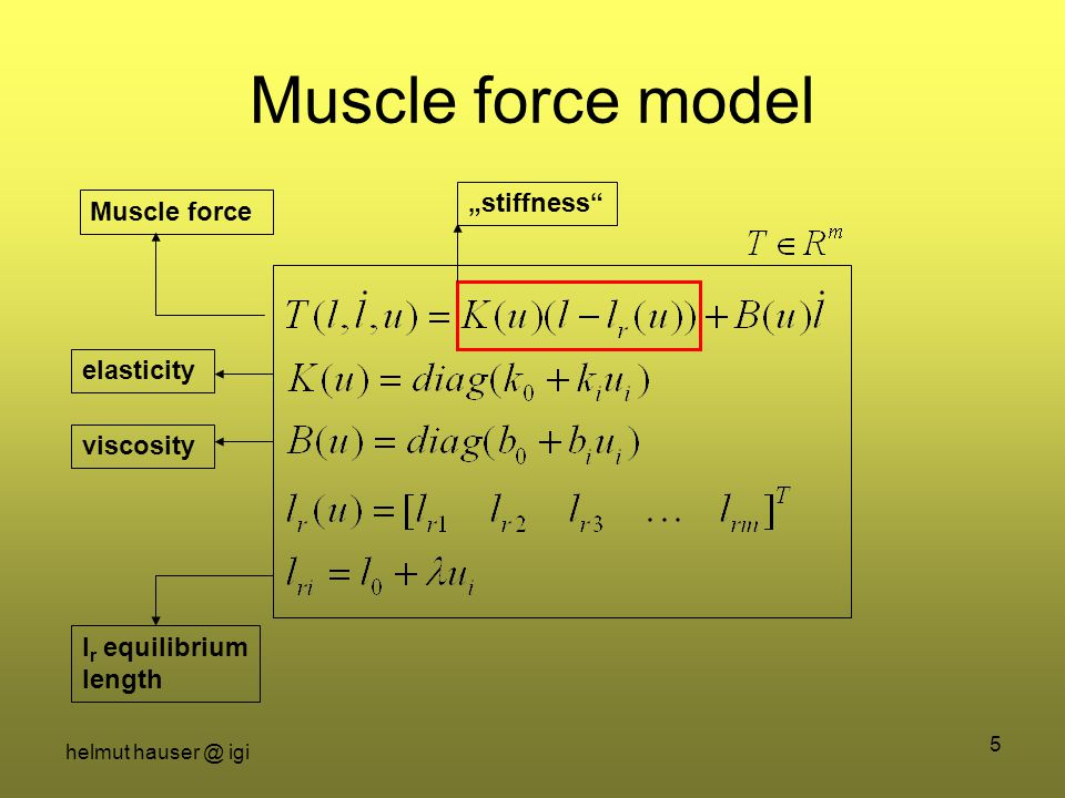 "helmut hauser @ igi 5 Muscle force model Muscle forceelasticityviscosity l r equilibrium length ""stiffness"
