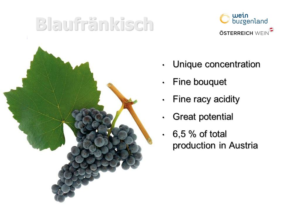 Blaufränkisch Unique concentration Unique concentration Fine bouquet Fine bouquet Fine racy acidity Fine racy acidity Great potential Great potential 6,5 % of total production in Austria 6,5 % of total production in Austria