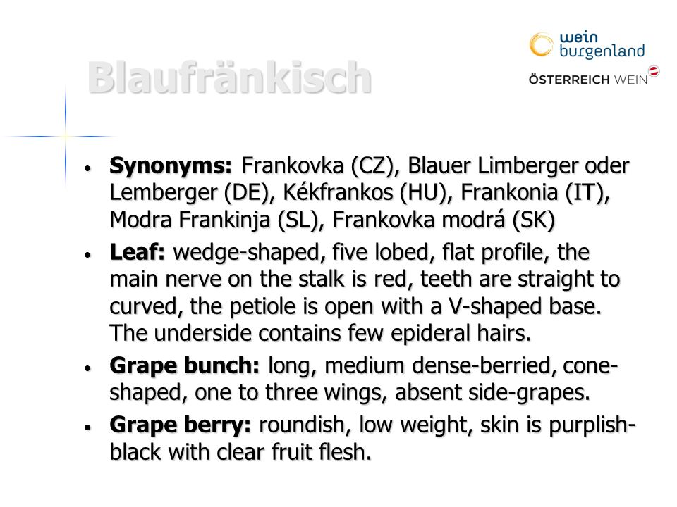 Blaufränkisch Synonyms: Frankovka (CZ), Blauer Limberger oder Lemberger (DE), Kékfrankos (HU), Frankonia (IT), Modra Frankinja (SL), Frankovka modrá (SK) Synonyms: Frankovka (CZ), Blauer Limberger oder Lemberger (DE), Kékfrankos (HU), Frankonia (IT), Modra Frankinja (SL), Frankovka modrá (SK) Leaf: wedge-shaped, five lobed, flat profile, the main nerve on the stalk is red, teeth are straight to curved, the petiole is open with a V-shaped base.