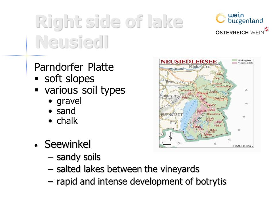Parndorfer Platte   soft slopes   various soil types gravel sand chalk Seewinkel Seewinkel –sandy soils –salted lakes between the vineyards –rapid and intense development of botrytis