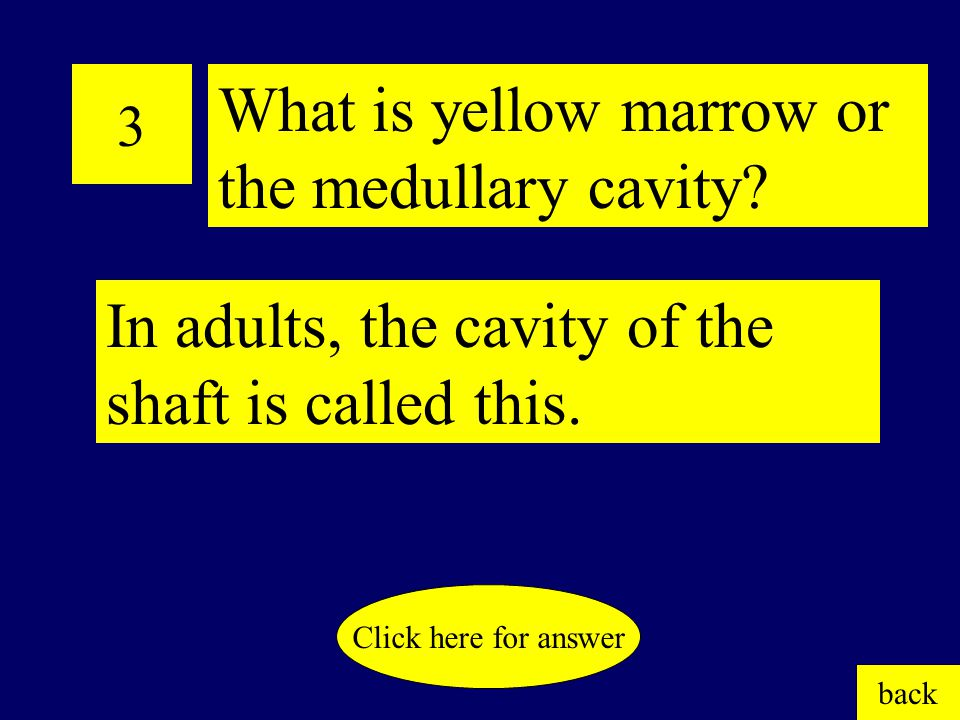 3 In adults, the cavity of the shaft is called this.