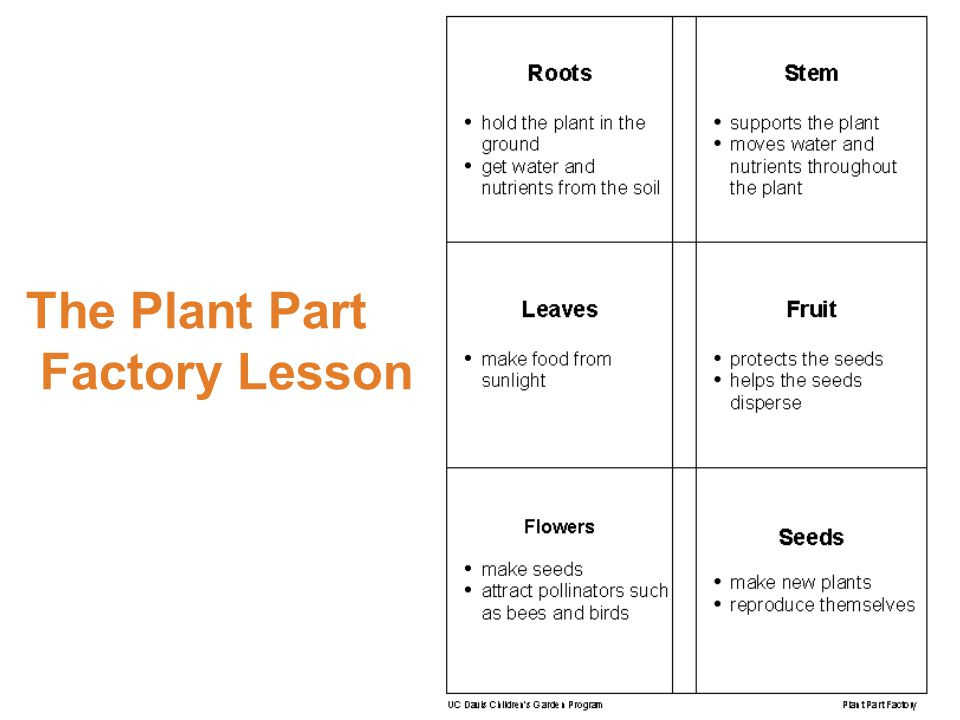 The Plant Part Factory Lesson