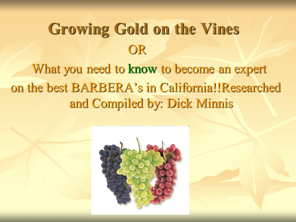 Growing Gold on the Vines Growing Gold on the Vines OR OR What you need to know to become an expert What you need to know to become an expert on the best BARBERA's in California!!Researched and Compiled by: Dick Minnis