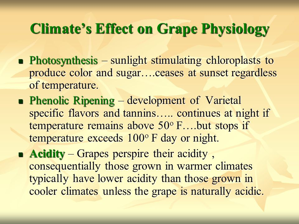 Climate's Effect on Grape Physiology Photosynthesis – sunlight stimulating chloroplasts to produce color and sugar….ceases at sunset regardless of tem