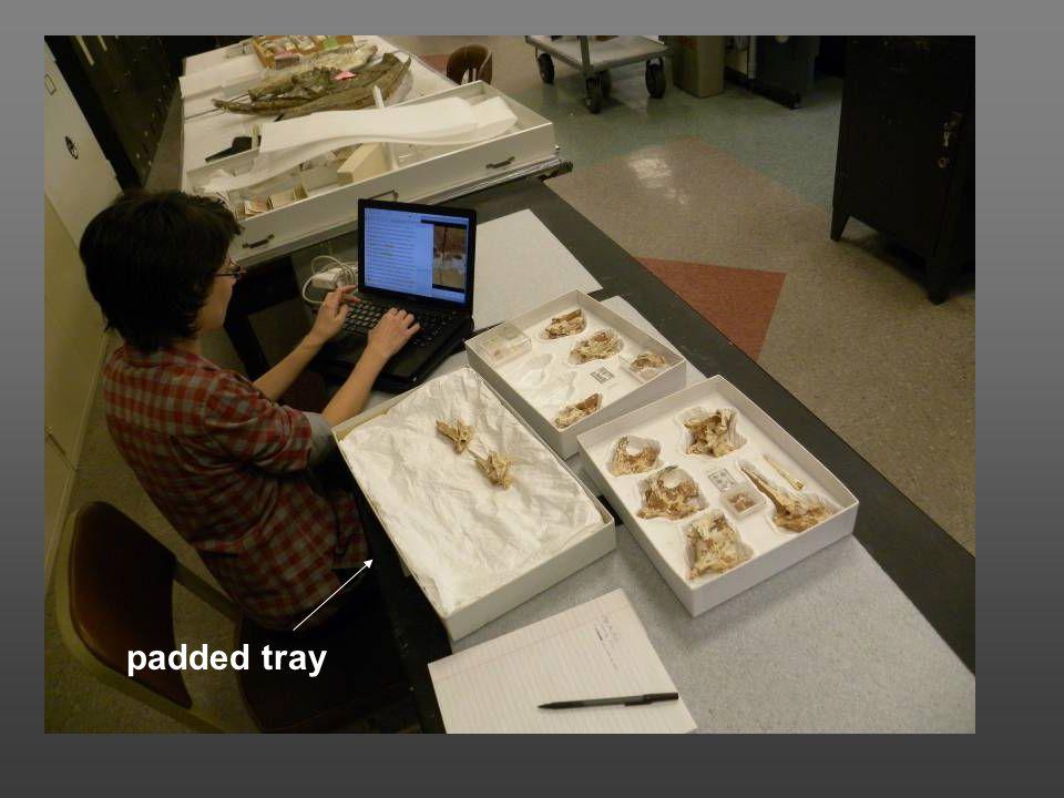 padded tray
