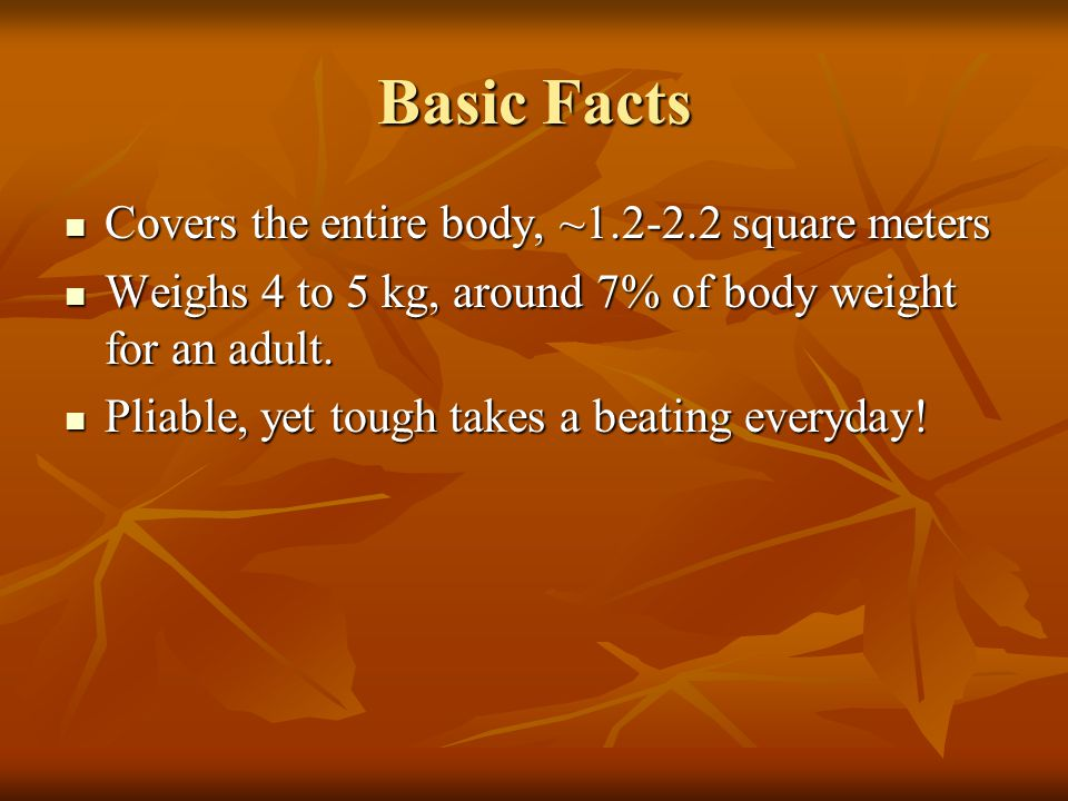 Basic Facts Covers the entire body, ~1.2-2.2 square meters Covers the entire body, ~1.2-2.2 square meters Weighs 4 to 5 kg, around 7% of body weight for an adult.