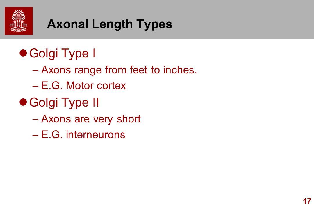 17 Axonal Length Types Golgi Type I –Axons range from feet to inches. –E.G. Motor cortex Golgi Type II –Axons are very short –E.G. interneurons