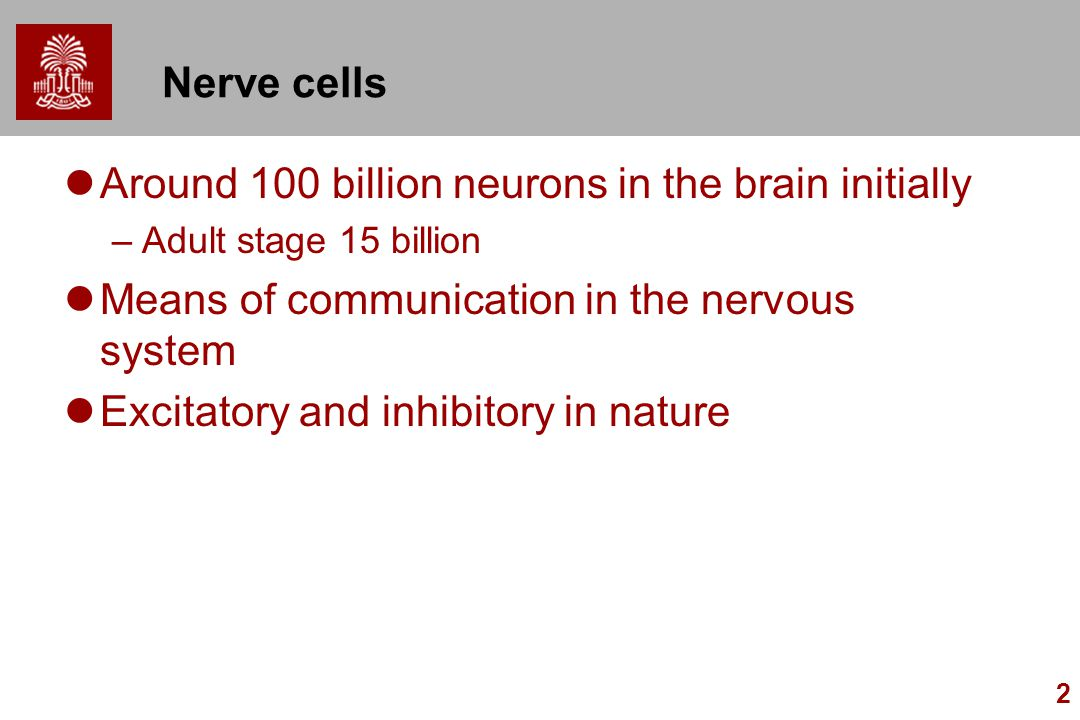 2 Nerve cells Around 100 billion neurons in the brain initially –Adult stage 15 billion Means of communication in the nervous system Excitatory and in
