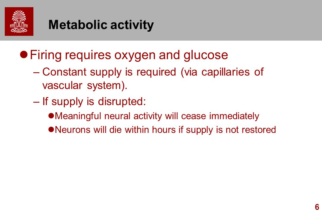 6 Metabolic activity Firing requires oxygen and glucose –Constant supply is required (via capillaries of vascular system). –If supply is disrupted: Me