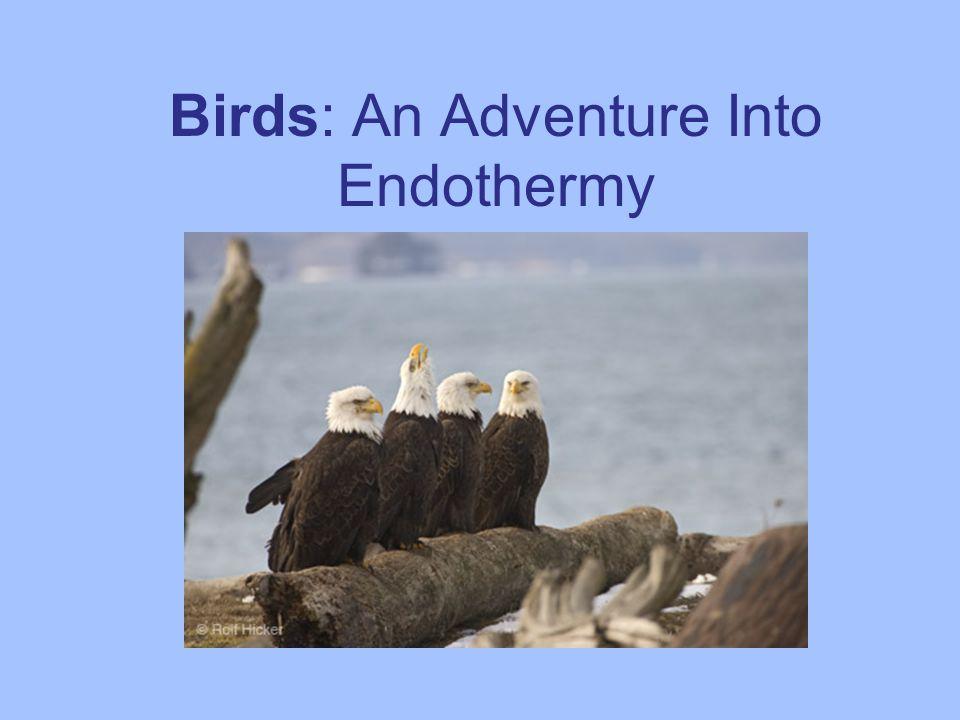 Birds: An Adventure Into Endothermy