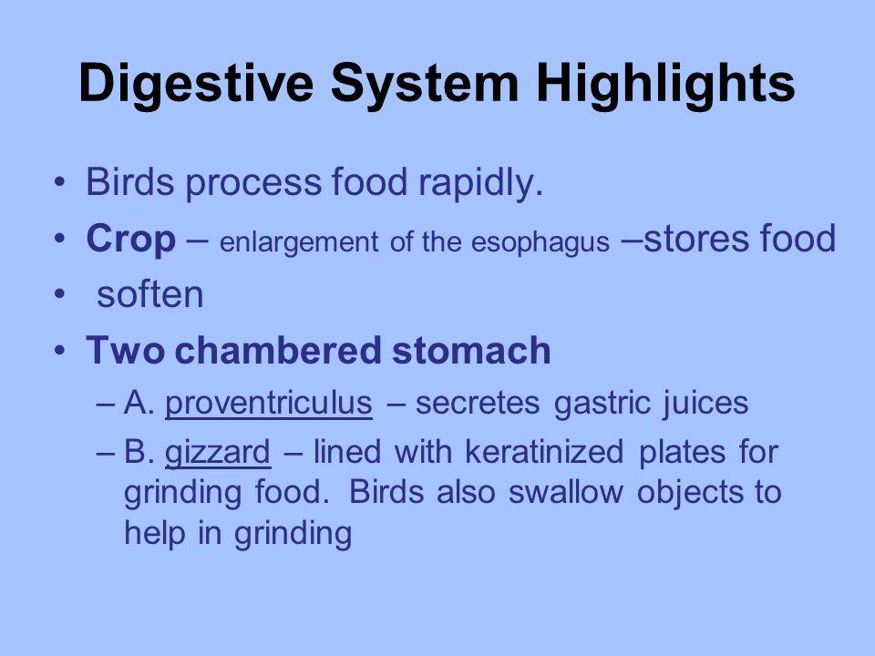 Digestive System Highlights Birds process food rapidly.