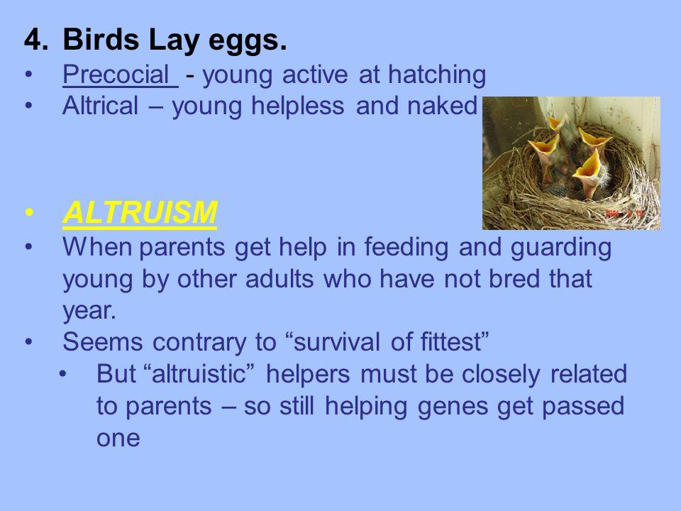 4.Birds Lay eggs.