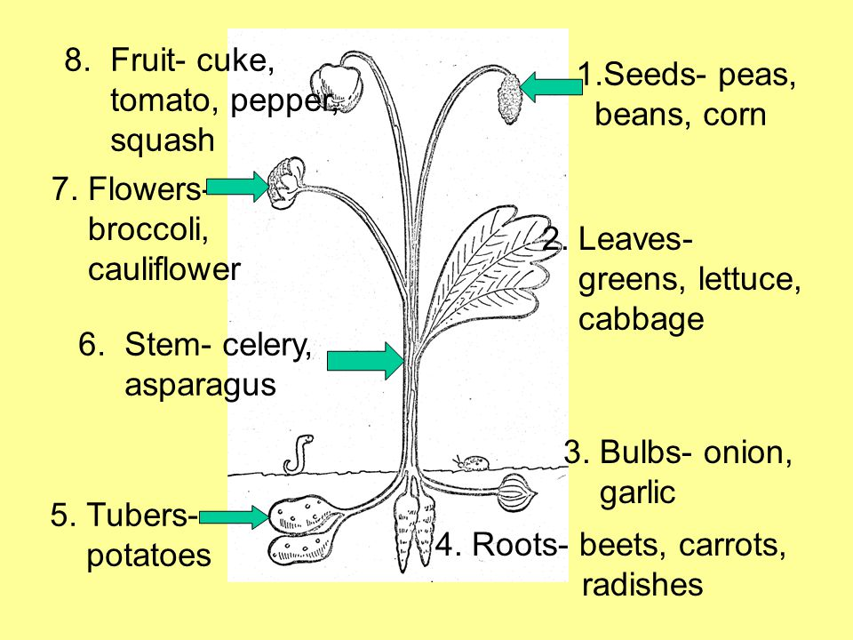 1.Seeds- peas, beans, corn 2. Leaves- greens, lettuce, cabbage 3.