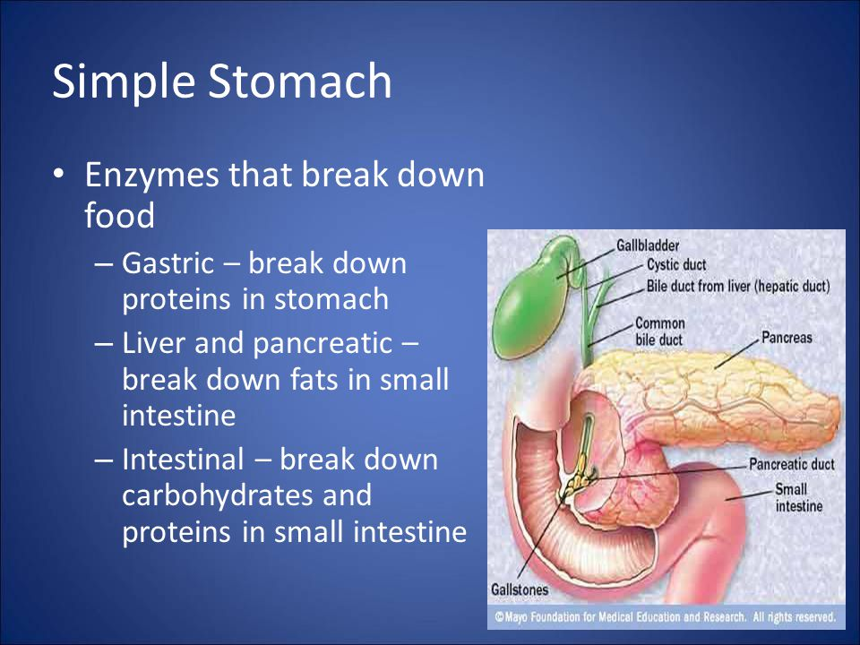 Simple Stomach Enzymes that break down food – Gastric – break down proteins in stomach – Liver and pancreatic – break down fats in small intestine – Intestinal – break down carbohydrates and proteins in small intestine