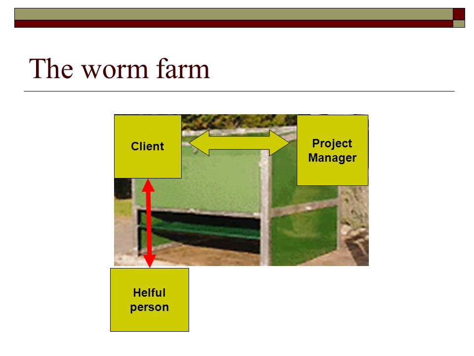 The worm farm Client Project Manager Helful person