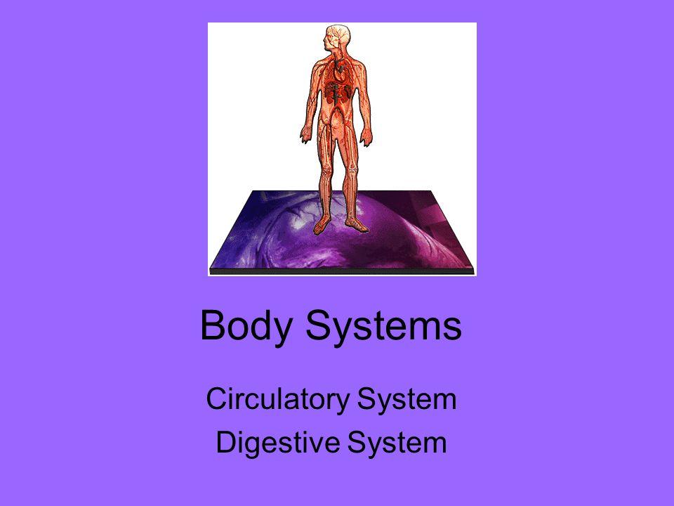 Body Systems Circulatory System Digestive System