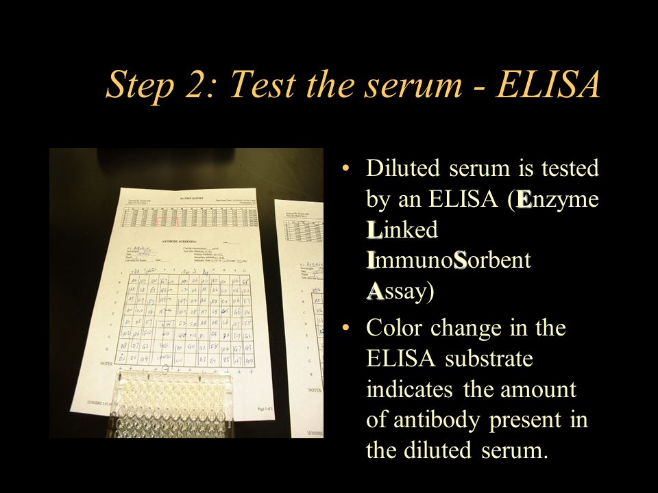 Step 2: Test the serum - ELISA E L IS A Diluted serum is tested by an ELISA (Enzyme Linked ImmunoSorbent Assay) Color change in the ELISA substrate indicates the amount of antibody present in the diluted serum.