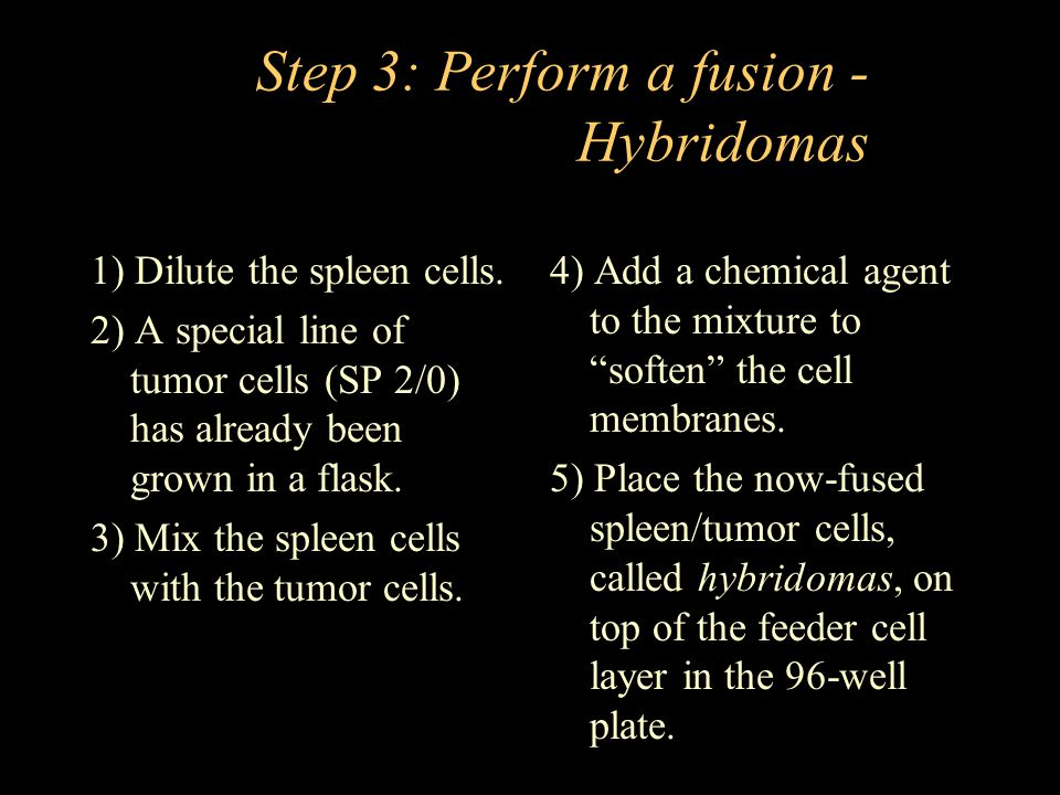 Step 3: Perform a fusion - Hybridomas 1) Dilute the spleen cells.