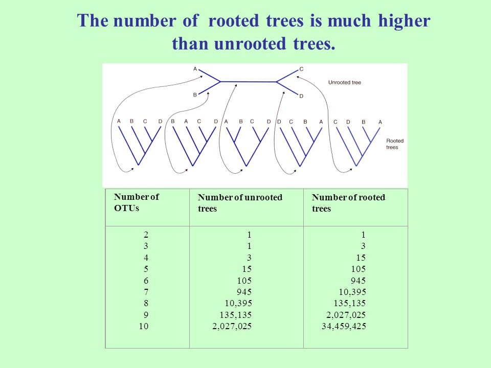 The number of rooted trees is much higher than unrooted trees.