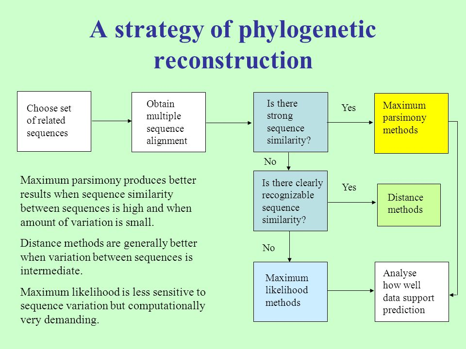A strategy of phylogenetic reconstruction Choose set of related sequences Obtain multiple sequence alignment Is there strong sequence similarity? Maxi