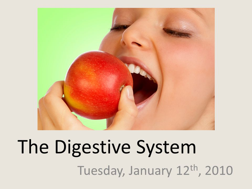 The Digestive System Tuesday, January 12 th, 2010
