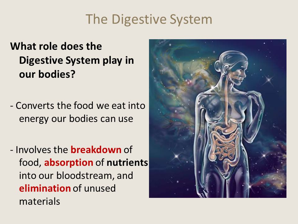 Sooo… How do the nutrients get into our blood to be distributed throughout the body? 15