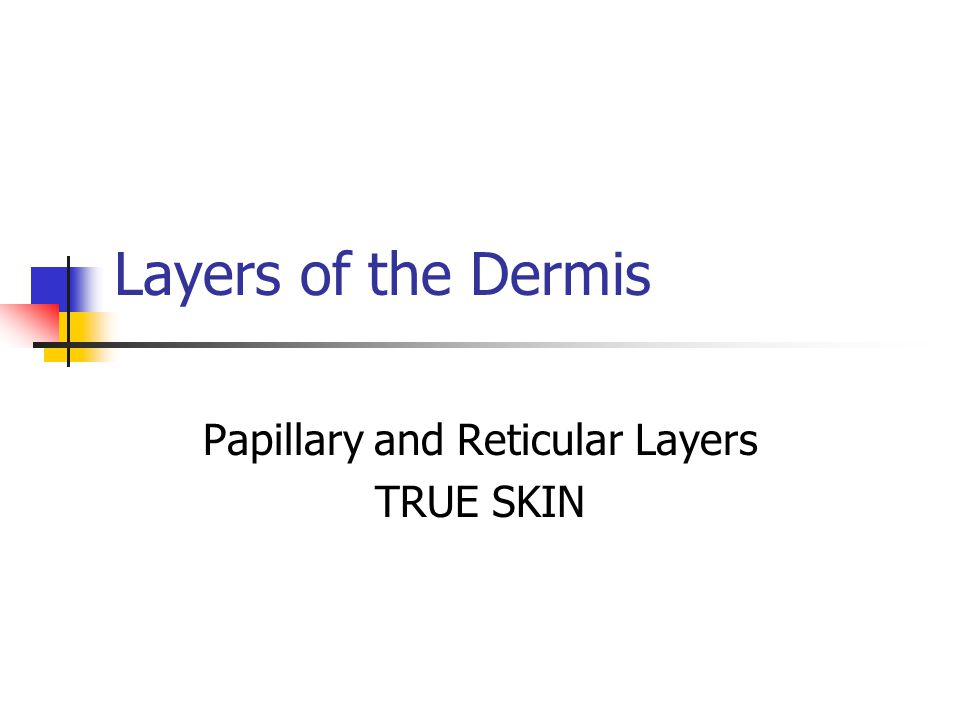 Layers of the Dermis Papillary and Reticular Layers TRUE SKIN
