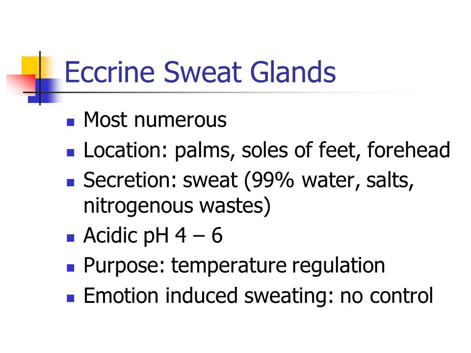 Eccrine Sweat Glands Most numerous Location: palms, soles of feet, forehead Secretion: sweat (99% water, salts, nitrogenous wastes) Acidic pH 4 – 6 Purpose: temperature regulation Emotion induced sweating: no control