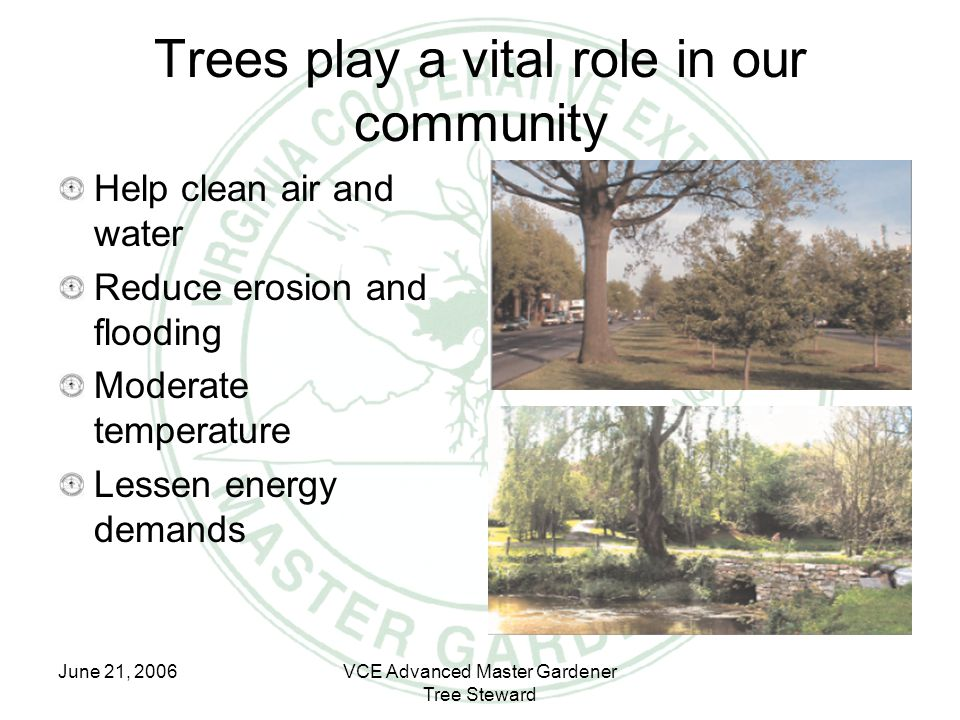 June 21, 2006VCE Advanced Master Gardener Tree Steward Trees play a vital role in our community Help clean air and water Reduce erosion and flooding M