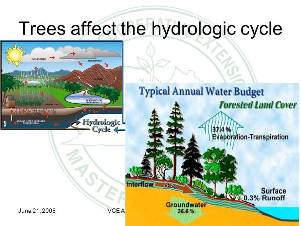 June 21, 2006VCE Advanced Master Gardener Tree Steward Trees affect the hydrologic cycle