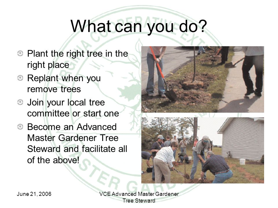 June 21, 2006VCE Advanced Master Gardener Tree Steward What can you do? Plant the right tree in the right place Replant when you remove trees Join you
