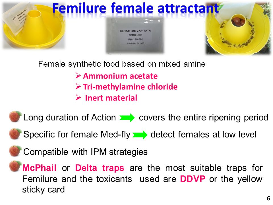 McPhail or Delta traps are the most suitable traps for Femilure and the toxicants used are DDVP or the yellow sticky card  Ammonium acetate  Tri-met