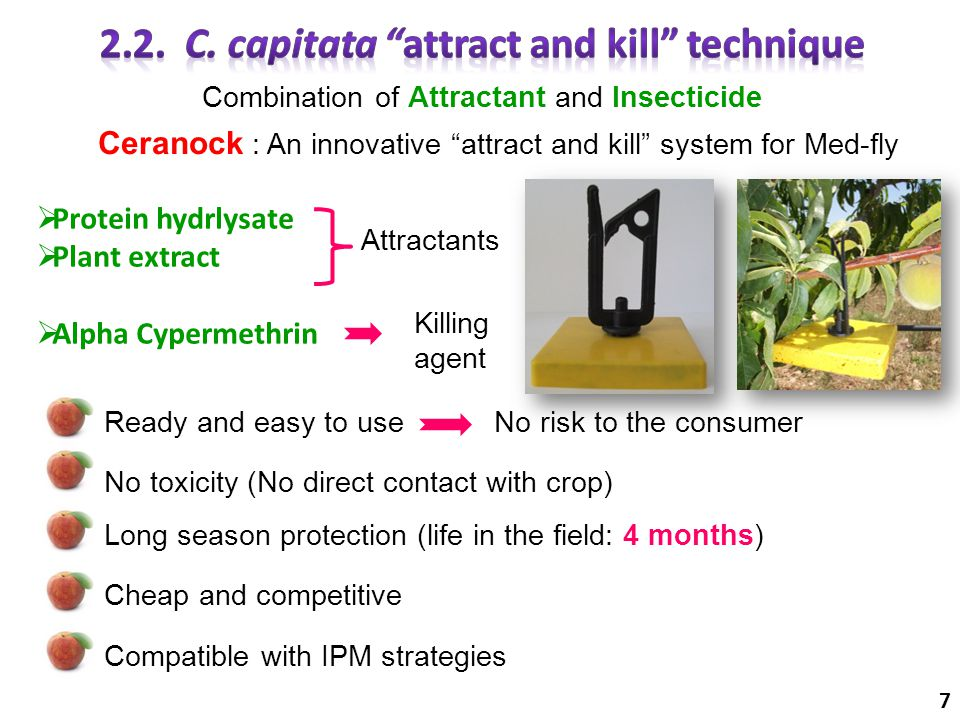 "Combination of Attractant and Insecticide 7 Attractants Ceranock : An innovative ""attract and kill"" system for Med-fly Compatible with IPM strategies"
